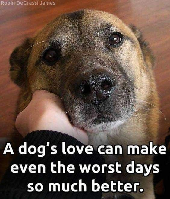 Dog ❤ I Love Dogs All Dogs Dog Care Cute s