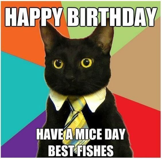 Happy Birthday Funny cat says have a mice day best fishes