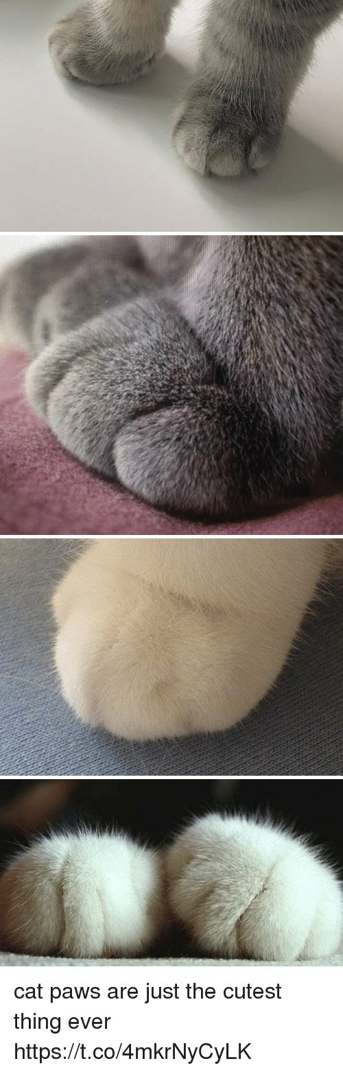 Funny Cat and Thing cat paws are just the cutest thing ever s