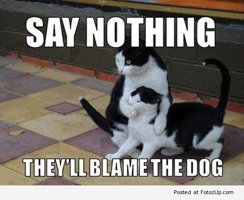 funny cats 013