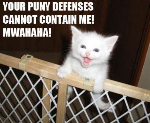 you cant help but chuckle at cute cat videos with funny sayings on them