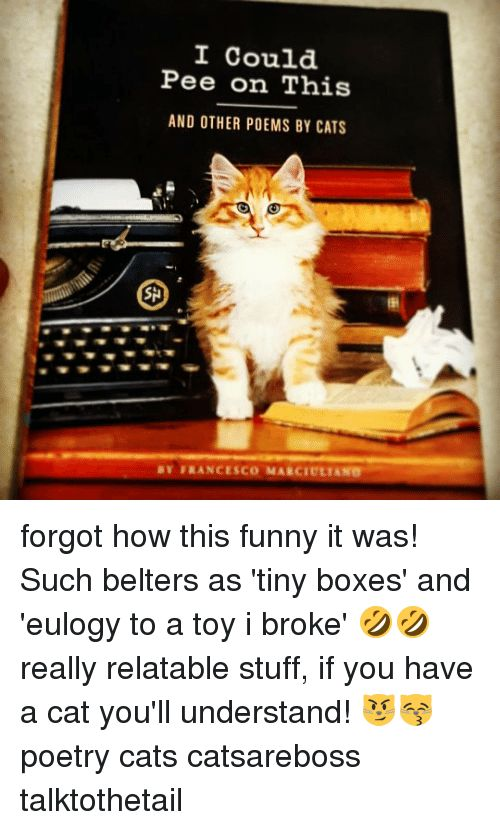 Cats Funny and Memes I Could Pee on This AND OTHER POEMS BY