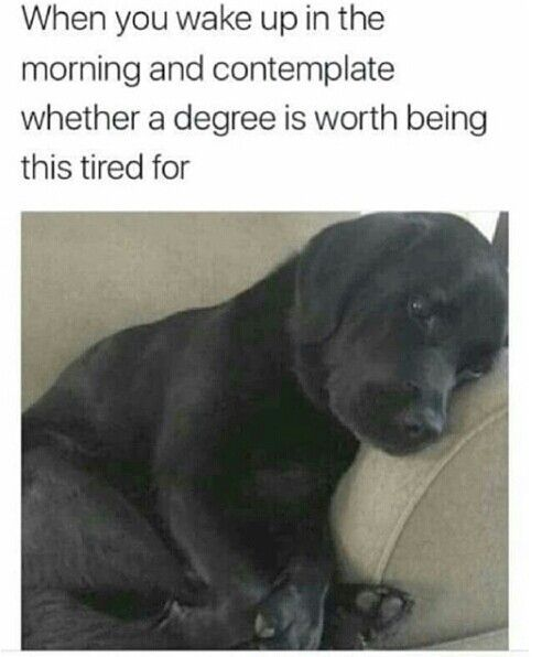 Take the Luxury Funny Tired Dog Memes