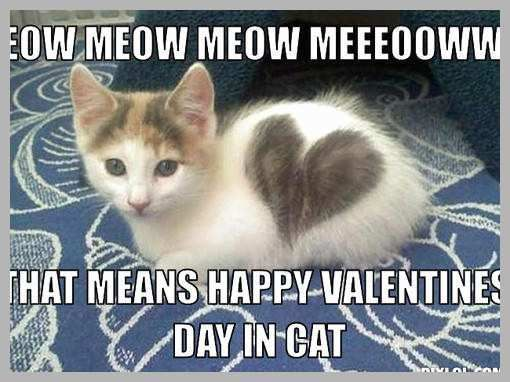 Happy Valentines Day Memes Great Image Valentine Kitteh Meme Generator Meow Meow Meow Happy Valentines