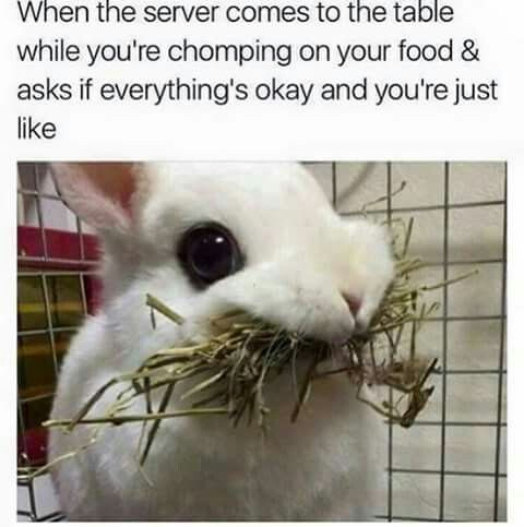 Except it s not as adorable as that Hello Meme Funny Funny Easter Memes Hello