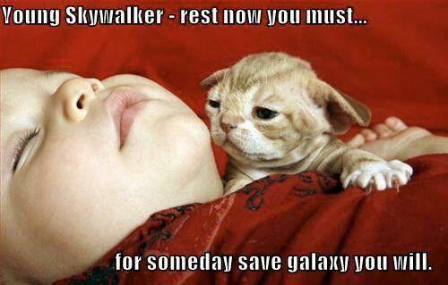 Starwars Yoda Kitten