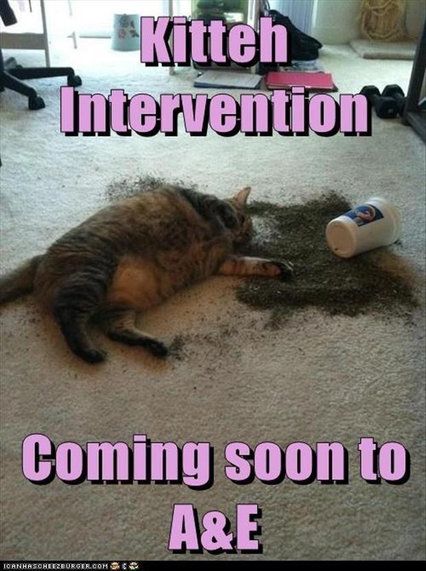 Catnip OD Dump A Day Funny Animal