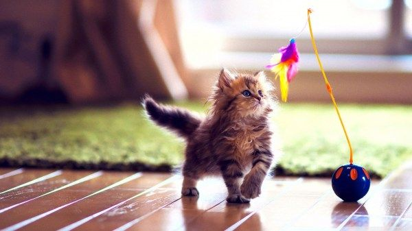 Take the Marvelous Funny Cat Pictures 1600x900