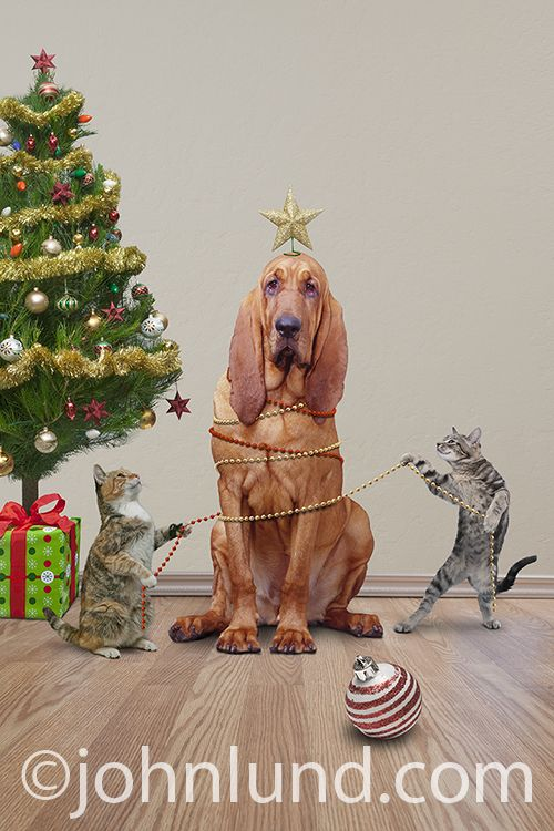 Cats Decorating Christmas Dog