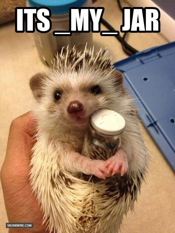 SkunkWire brings you cute and funny animal pictures every day We got funny cats and