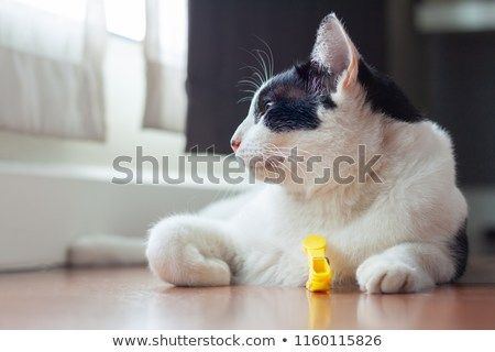 Funny cat is playing a yellow clothespin Black cat Batman face think of