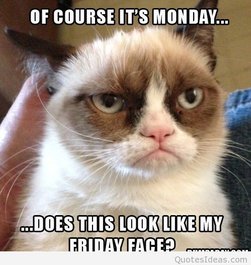 Funny Grumpy Cat meme quote I hate monday