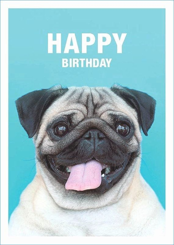 Dog Cards Birthday Unique Humorous Birthday Card Funny Dog Card – thomasdegasperi