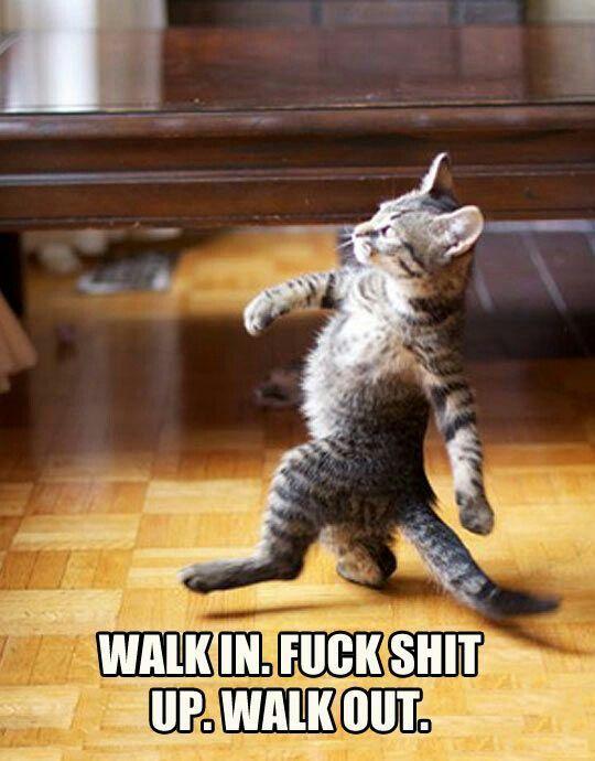 Cat Memes Hilarious Hilarious Animals Hilarious Animal Funny Memes