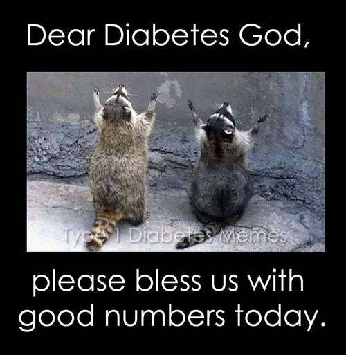 Type 1 Diabetes Memes Funny s Funny Animal s Animal Cute