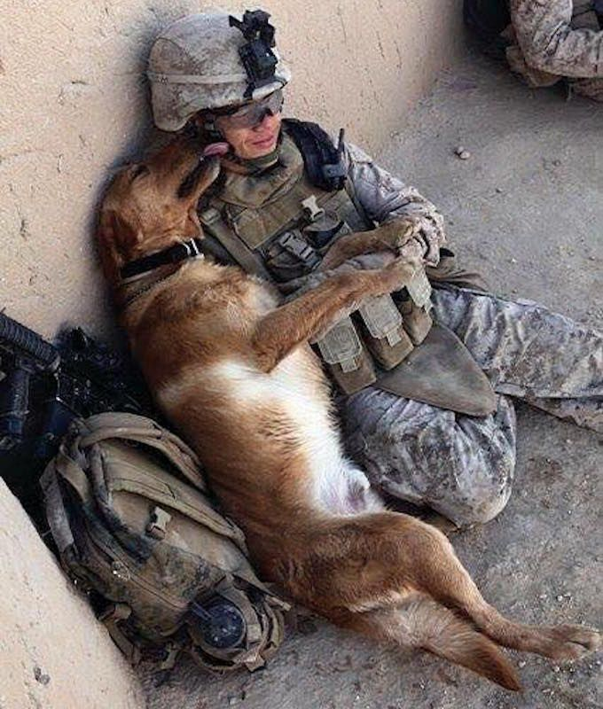 21 Moving s Show The Unbreakable Bond Sol rs And Their Military Dogs