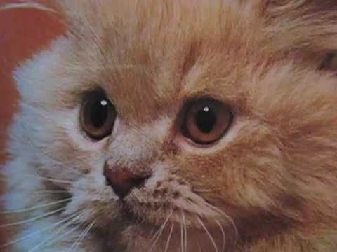 kittens inspired by kittens