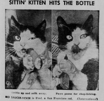 Take the New Funny Cat Like Reflexes Memes