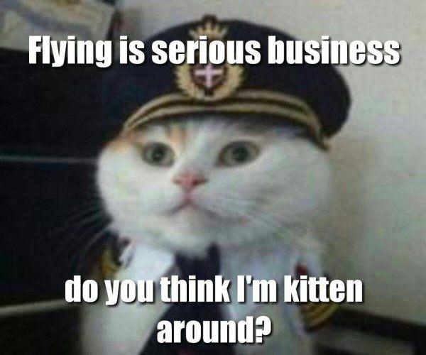 Flying Cat Ball Meme
