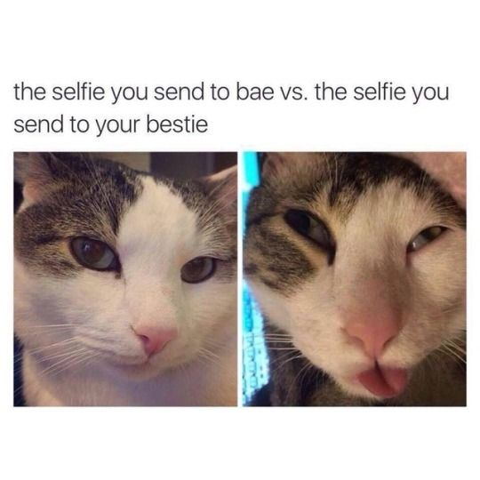 cats funny cats cat memes catstagram