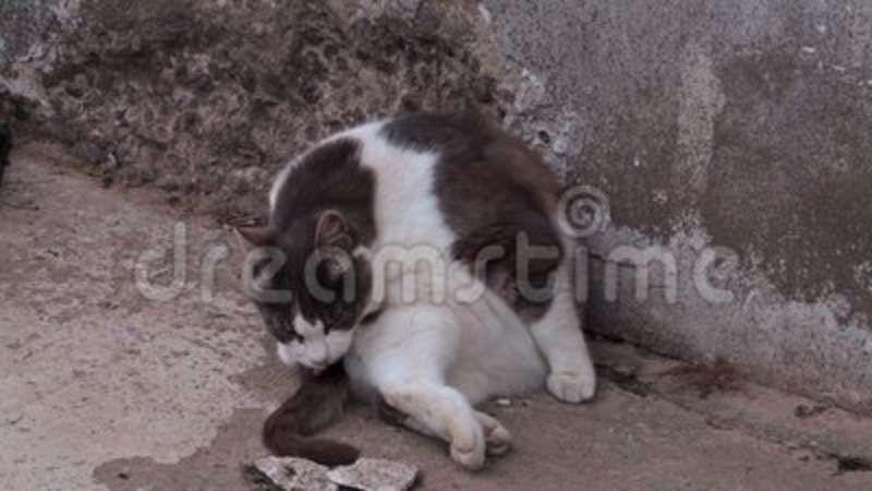 Funny cat sitting near wall