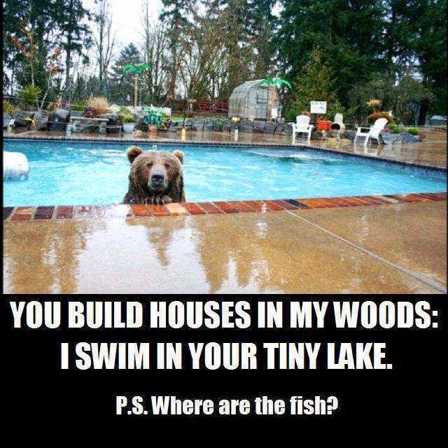 LOL Humor Animal Animal Memes Animal Antics Animal Captions Animal Logic