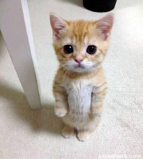 Take the New Funny Sad Cat Pictures