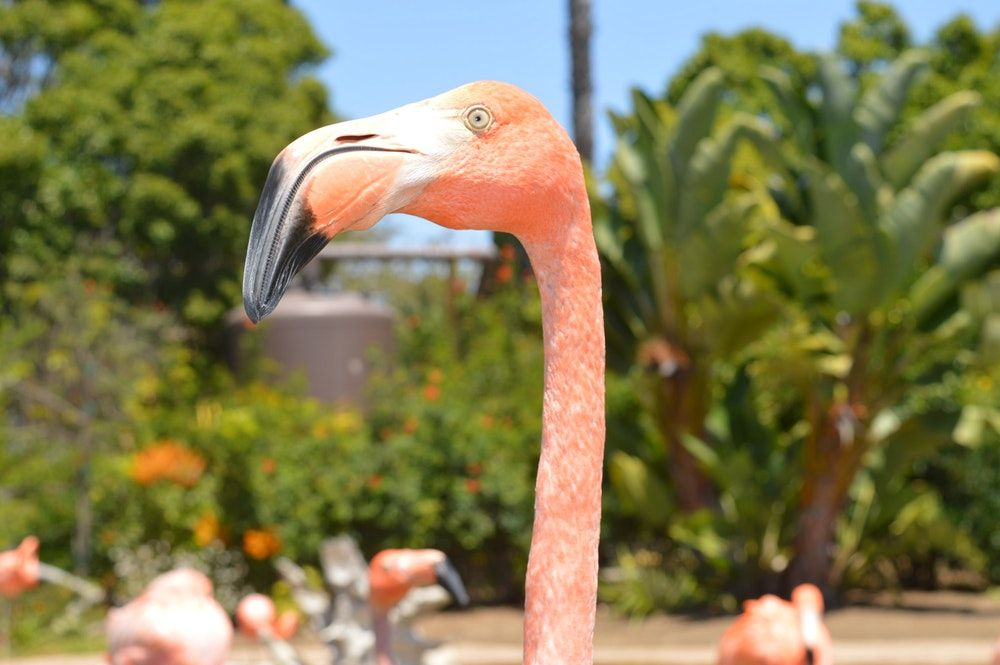 focus photography of flamingos walking near green leafed plants during daytime
