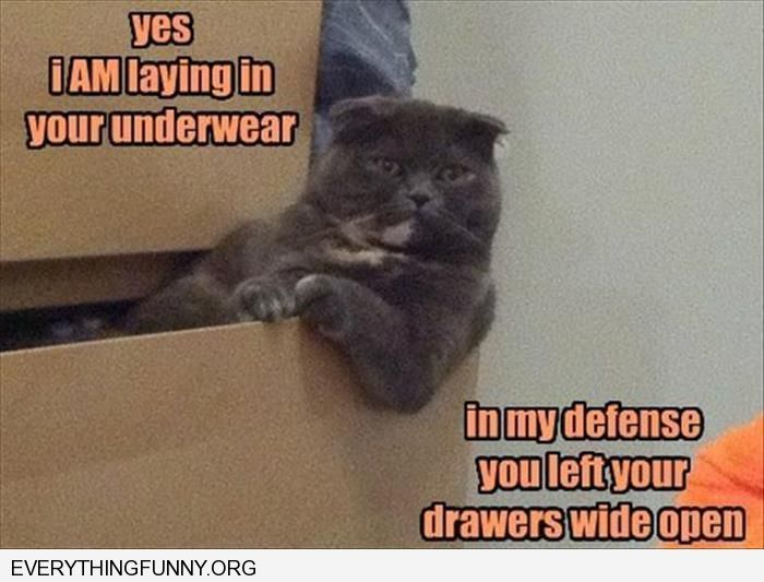 funny cat pictures yes i am lying in your underwear drawer in my defense you left your drawers wide open
