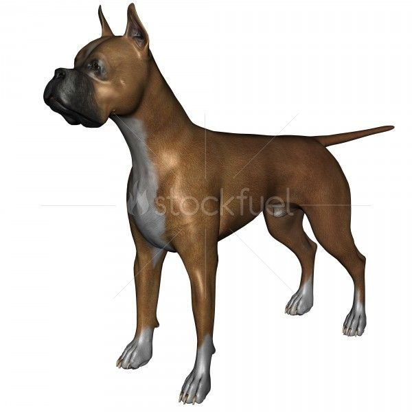 3D Rendered Boxer