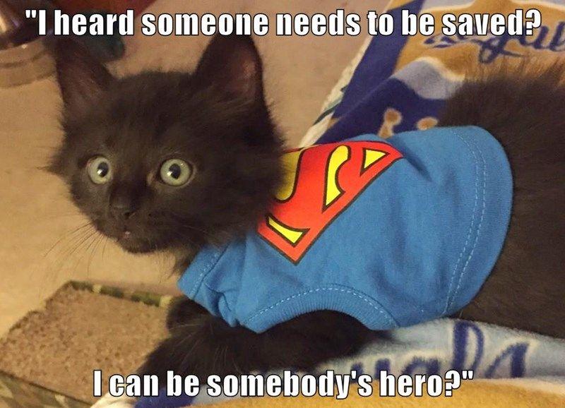 animals cute superheroes caption Cats
