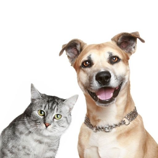 Dog cat animal cry laugh sing song funny sounds