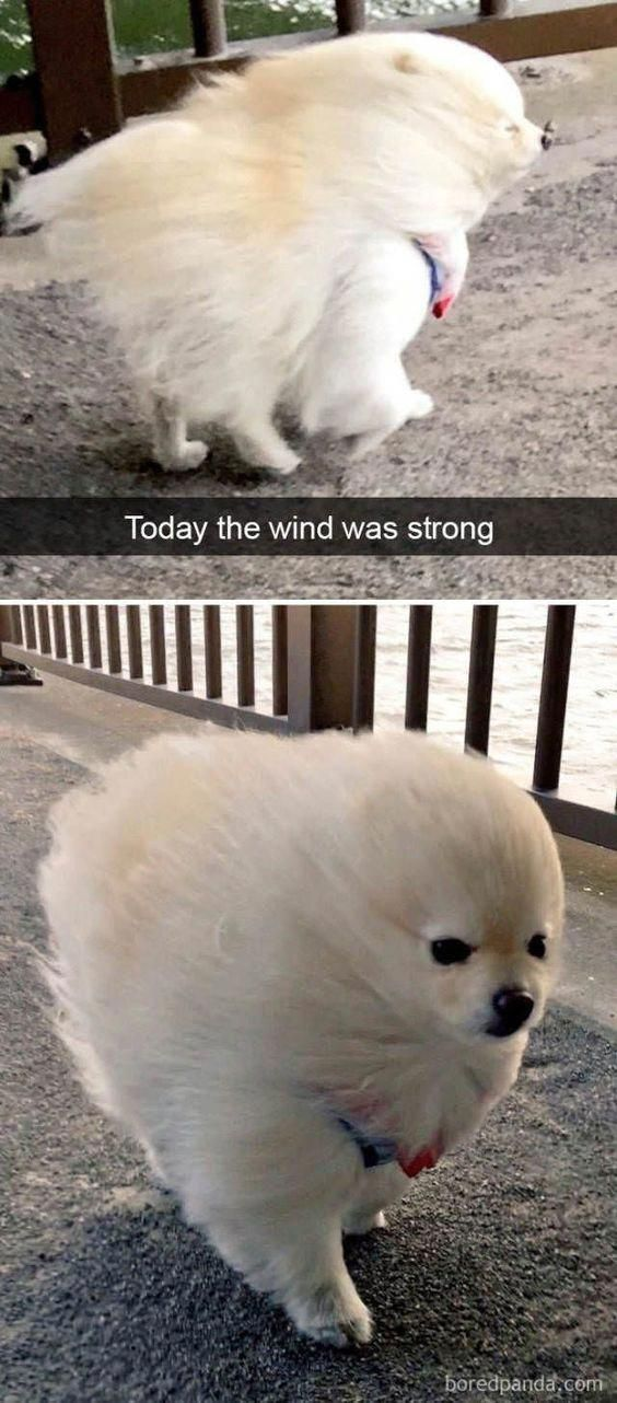25 Pics Funny Dog Memes to Cheer You Up on a Bad Day Lovely Animals World animalmemes funnydogimages