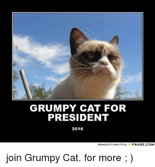 Take the Prodigious Funny Memes Of Grumpy Cat
