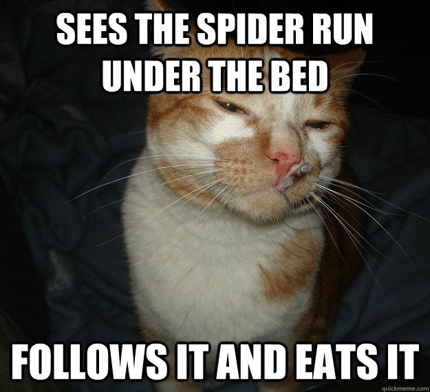 Sees the spider run under the bed follows it and eats it