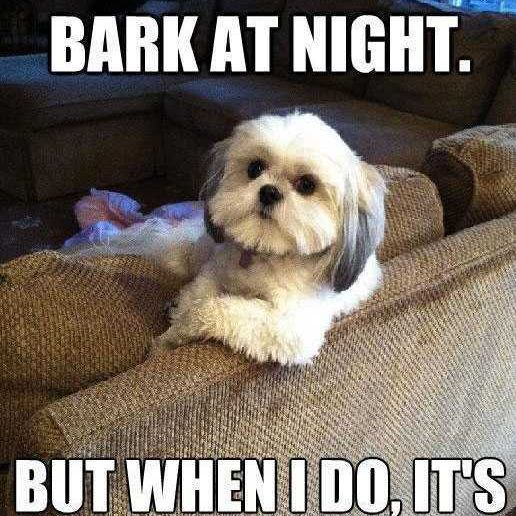Most Interesting Dog in the World