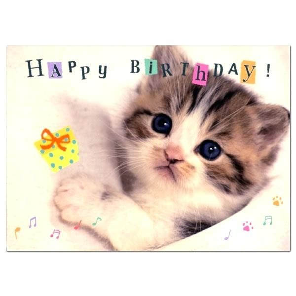 Take the Prodigious the Funny Cat Birthdday Pictures
