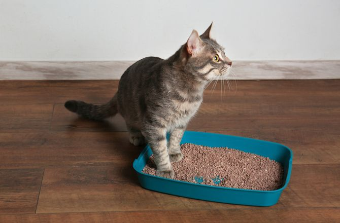 They Use Their Litter Box