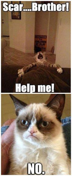 lion king vs grumpy cat Grumpy Cat Disney Grumpy Cat Meme Gato Grumpy