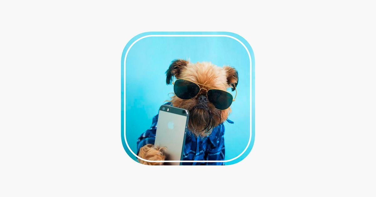 Animal Selfie Funny Superimpose Cats on the App Store