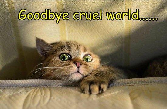 Take the Shocking Funny bye Memes Cat