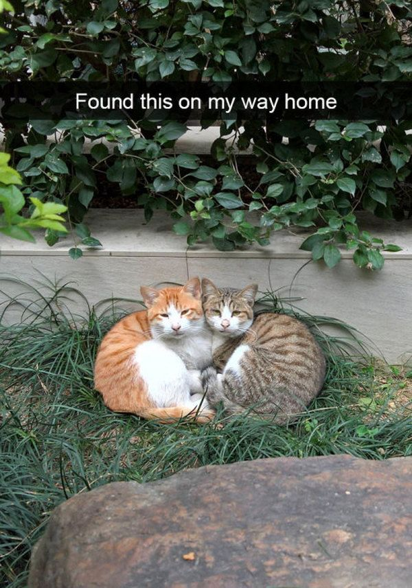 That s why we ve put to her this gallery of hilarious cats memes to make your day even better If you like this cat gallery please share it with your