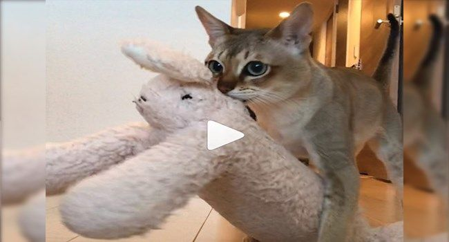 funny cat videos videos cute cute cats funny cats cat videos Cats funny