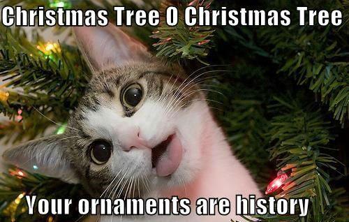 Best 50 Funny Christmas Memes