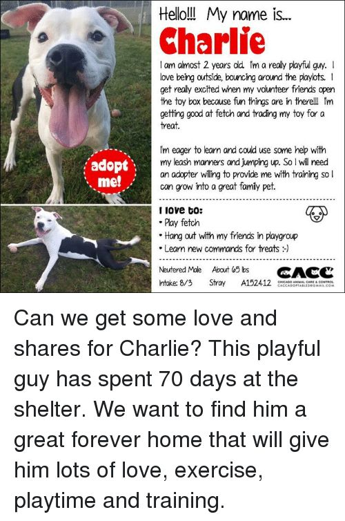 Adopt Me Hello My Name Is Charlie I Am Almost 2 Years Od M a Really Payful Guy I Love Being Outside Bouncing Around the Payots Get Really Excited When My