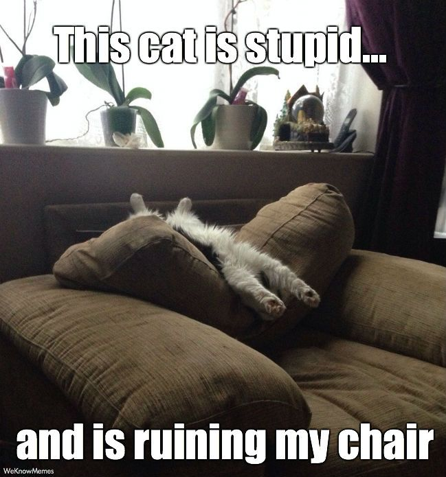 This Cat Is Stupid And Is Ruining My Chair Cat Meme
