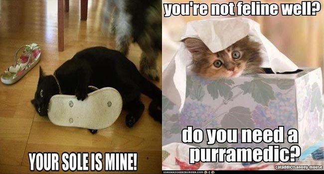 funny cat memes z cat meme funny memes puns cute Memes cute cats funny cats