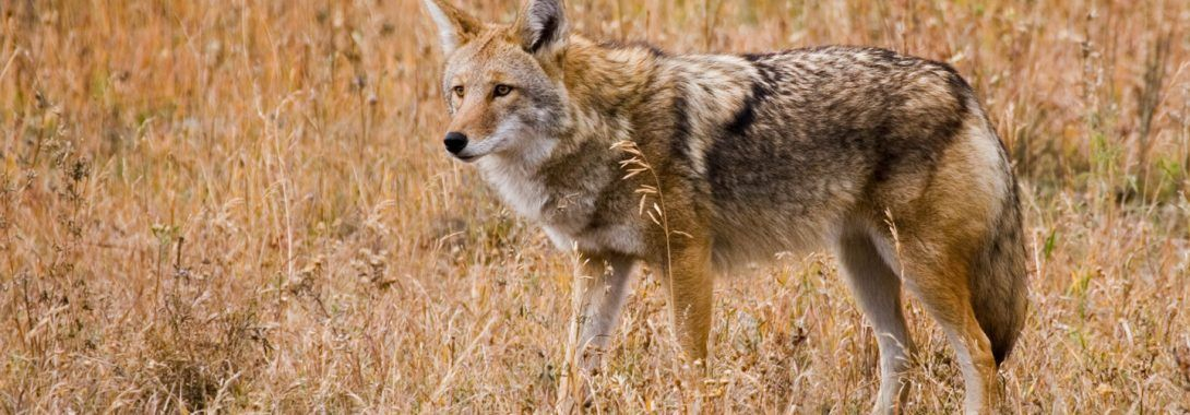 Animal Totems Land Animals
