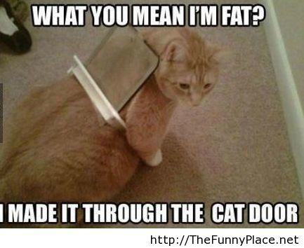 My fat cat is funny