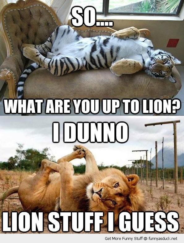 Lion Stuff I Guess Funny Lion Meme Image